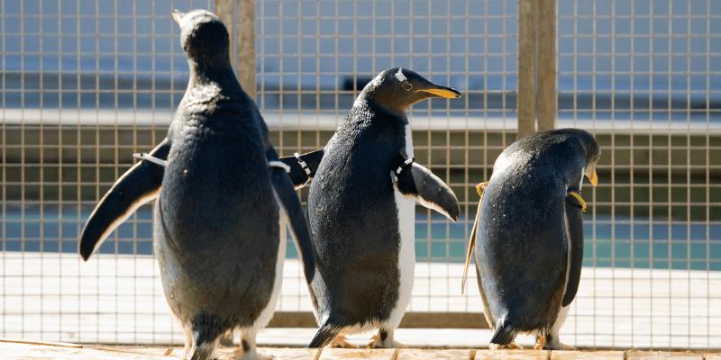 Link building jako ochrona przed Pingwinem (sugestia Google)