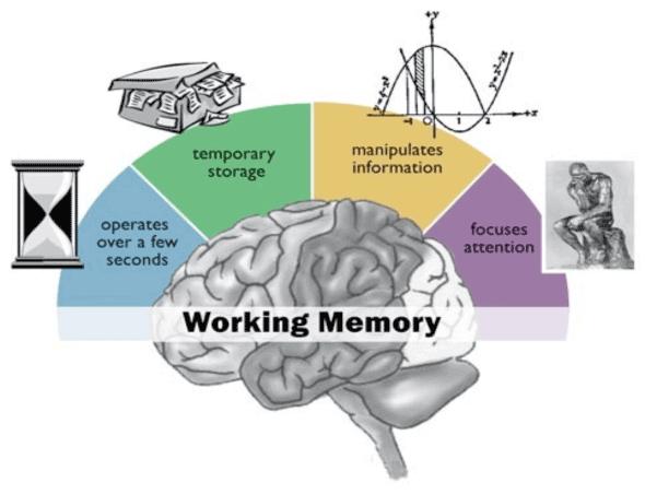 pamięć robocza / operacyjna mózgu